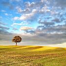 Tree on the horizon by jrsisson