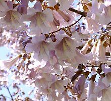 Paulownia Tree by Gabrielle  Lees
