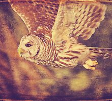 Barred Owl Textured by cesstrelle