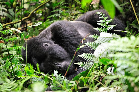 """""""Forty Winks"""" - I by Andreas Koerner"""