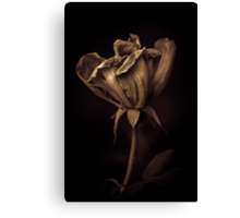 Nutella coated flower Canvas Print