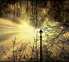 Sunrays © by Dawn M. Becker