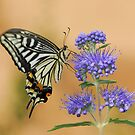 purple and swallowtail by davvi