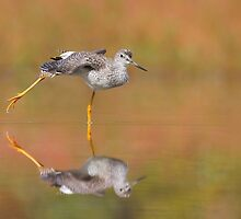 Another Autumn Greater Yellowlegs. by Daniel Cadieux