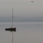 Sailboat & Seagull by BeachBumPics