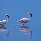 Lesser Flamingos.  Lake Bogoria, Kenya by Neville Jones