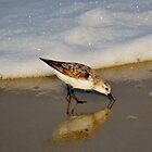 Beach Bird by BeachBumPics