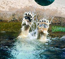 Playful Polar Bear by Diego  Re