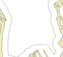 Skeleton Of A Sloth Sticker
