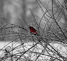 Cardinal in the Snow by Dennis Maida