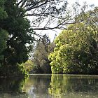 Trees Along The Riverbank by aussiebushstick