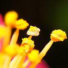 Flower Pollen by Fayth