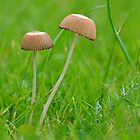 Mycena  by relayer51