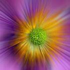 Anemone blur by SteveHphotos