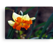 Full of Spring Color Canvas Print