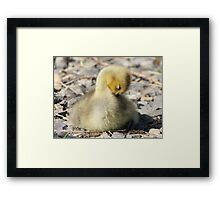 You'll have to forgive me, I'm shy Framed Print