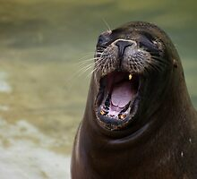 Seal telling a dirty joke by Yampimon