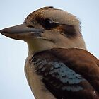 Close Up Kookaburra by julieapearce