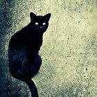 Black cat by marina63