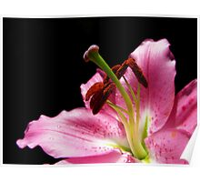 Lily stigma and stamen on black Poster