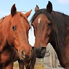 Two Horses by Jim Sauchyn