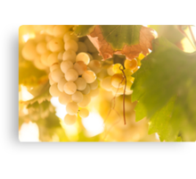 Harvest Time. Sunny Grapes IV Canvas Print