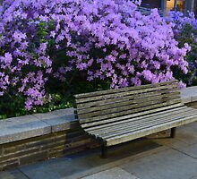 Purple Bench by jayteez