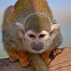 Squirrel monkey by bobbykim666