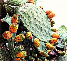 Prickly pears by Wendy  Rauw