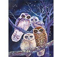 Boobook Owl Family Photographic Print