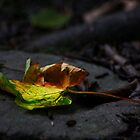 Leaf by Jordan Moffat
