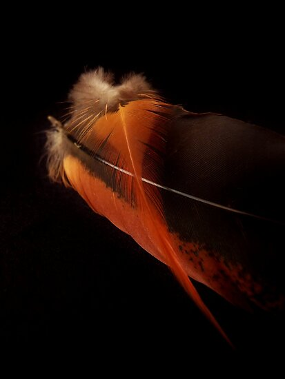 Found Feathers by Barbara Morrison