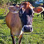 Little Heifer by cammisacam