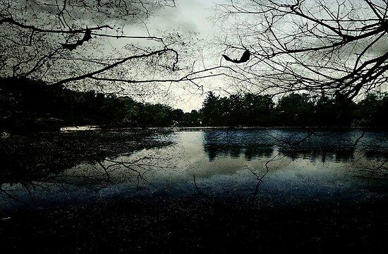 As evening falls © by Dawn M. Becker