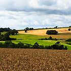 English Countryside - West Sussex, England by Jennifer Vollebregt