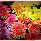 fall mums by Lynne Prestebak