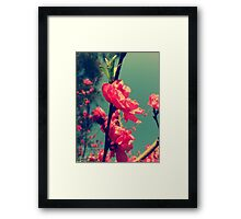 Lomo Blossoms  Framed Print