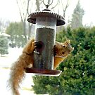 Hanging Out at the Feeder by Stephen D. Miller