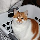 Tori Claims the Laundry Basket by Stephen D. Miller