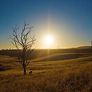 A Sunburnt Country - Sunset on the Hills of Kanmantoo, South Australia  by Mark Richards