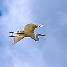 Glider - A Great Egret, Renmark on the River Murray, SA by Mark Richards