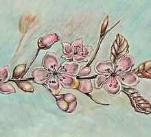 cherry blossom flowers by thuraya o