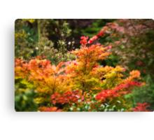 The Colour Changes in Autumn Canvas Print