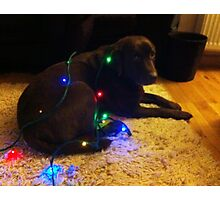 Christmas Canine Photographic Print