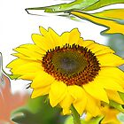 Sunflower by Aase