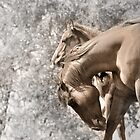 Mare and her filly by pdsfotoart