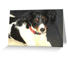 Odessa On Watch Greeting Card