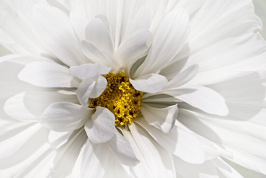 Joyful cosmos by Celeste Mookherjee