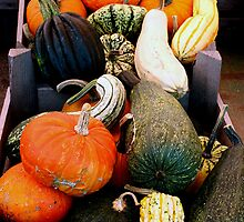 Autumn Squashes & Pumpkins Display by patjila