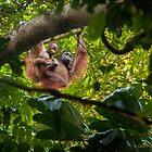 Mother & Baby Orangutan  by Orangutans